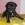 Zuchttauglichkeitsprüfung Hund, Oberpfalz, Französische Bulldogge
