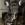 Robert Engl, Französische Bulldogge, Bayrischer Wald
